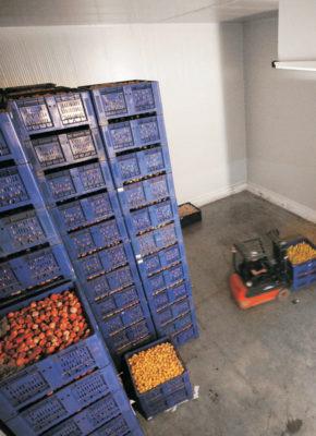 Camara frigorifica de fruta