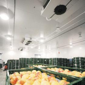 Camara frigorifica hortofruticola