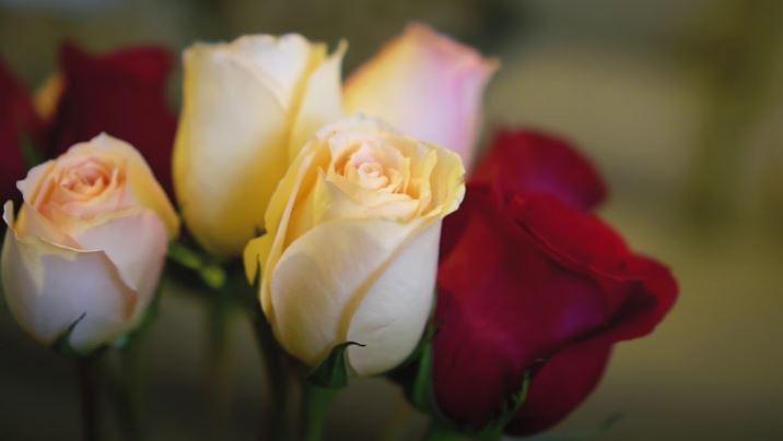 como conservar las flores de manera refrigerada